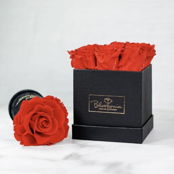 THE LEGACY – Evighetsrosor - Röd - Box Fyrkantig - Classic Black - BEF2C01E1 - 2