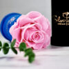 THE PRINCIE - Evighetsros - Rosa - Velvet - Royal Blue - BER0V02E3 - 3