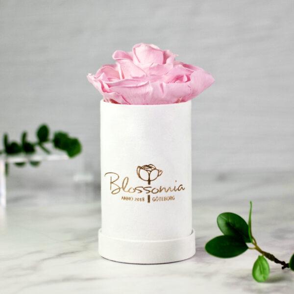 THE PRINCIE - Evighetsros - Rosa - Velvet - Pearl White - BER0V00E3 - 1