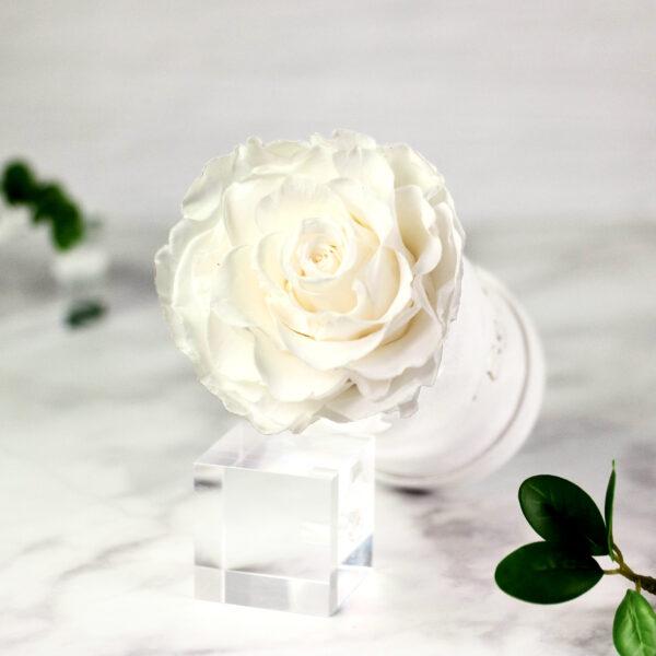 THE PRINCIE - Evighetsros - Vit - Velvet - Pearl White - BER0V00E2 - 2