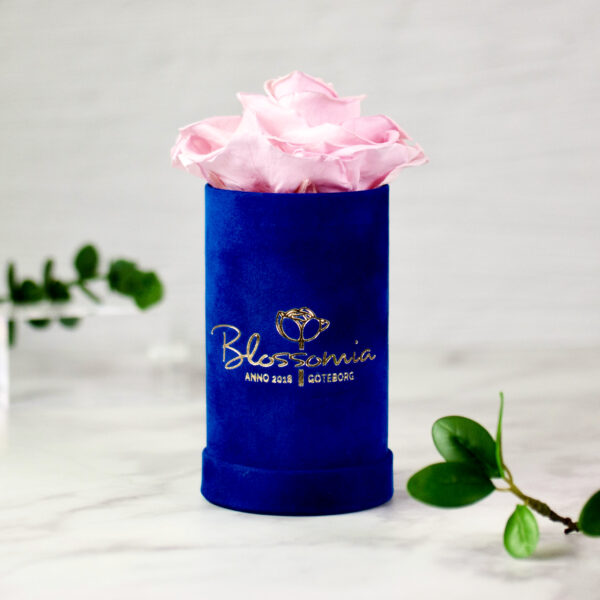 THE PRINCIE - Evighetsros - Rosa - Velvet - Royal Blue - BER0V02E3 - 1