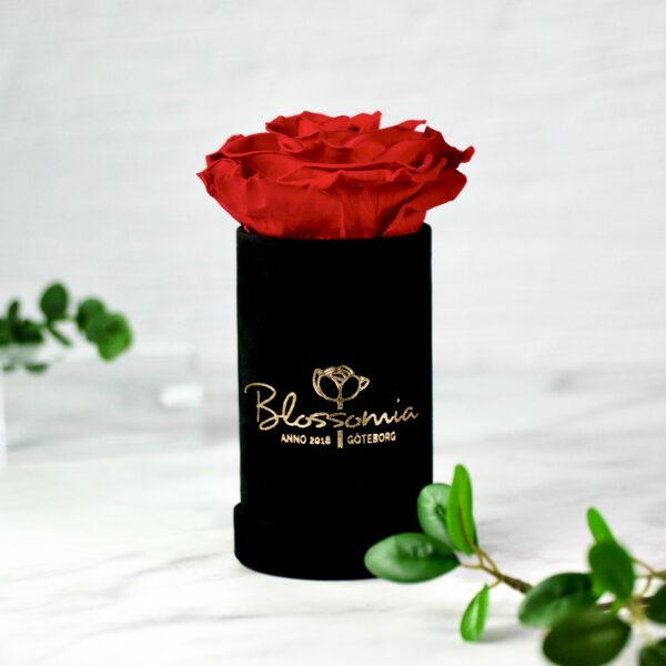 THE PRINCIE - Evighetsros - Röd - Velvet - Black Midnight - BER0V01E1 - 1