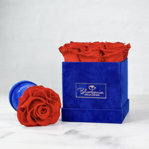 THE LEGACY – Evighetsrosor - Röd - Box Fyrkantig - Royal Blue - BEF2V02E1 - 2