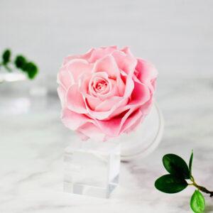 THE PRINCIE - Evighetsros - Rosa - Velvet - Pearl White - BER0V00E3 - 2