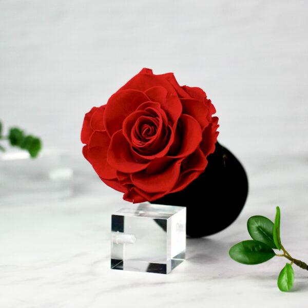 THE PRINCIE - Evighetsros - Röd - Velvet - Black Midnight - BER0V01E1 - 2