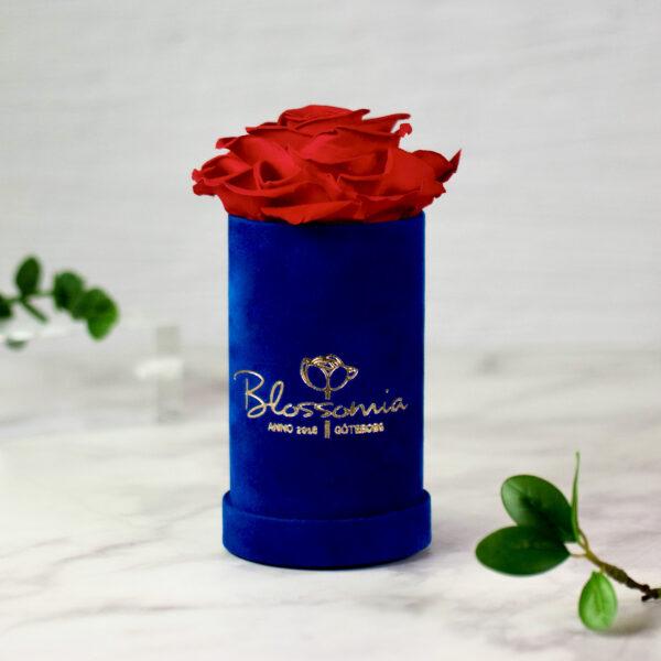 THE PRINCIE - Evighetsros - Röd - Velvet - Royal Blue - BER0V02E1 - 1