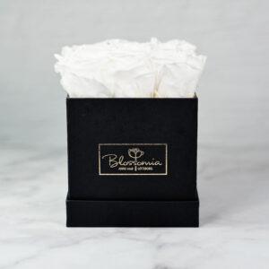 THE LEGACY – Evighetsrosor - Vit - Box Fyrkantig - Classic Black - BEF2C01E2 - 1