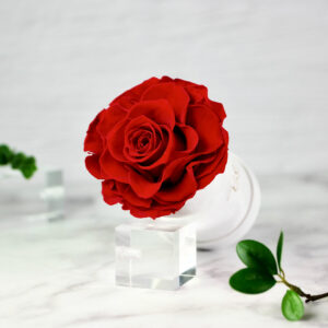 THE PRINCIE - Evighetsros - Röd - Velvet - Pearl White - BER0V00E1 - 2