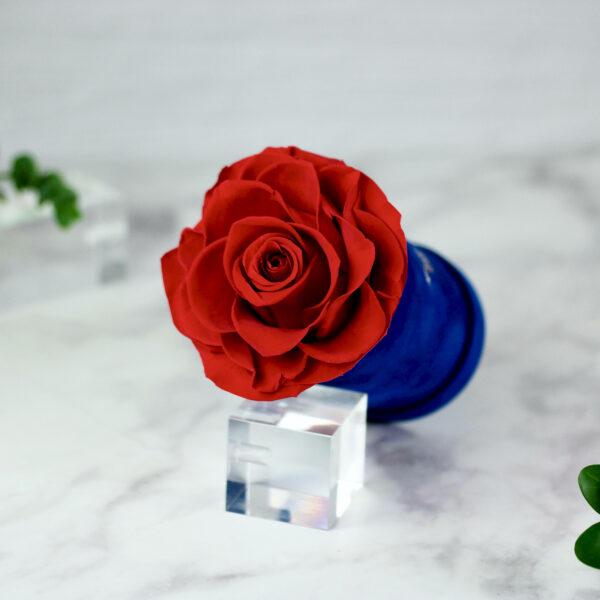 THE PRINCIE - Evighetsros - Röd - Velvet - Royal Blue - BER0V02E1 - 2