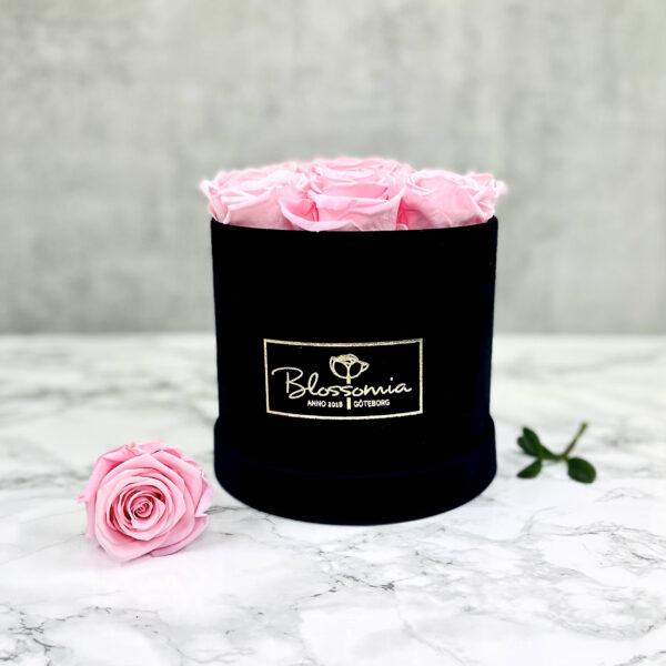 THE JUBILEE – Pink Evighetsrosor Box Rund - Velvet Black Midnight 11