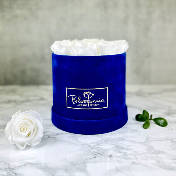 THE JUBILEE – White Evighetsrosor Box Rund - Velvet - Royal Blue 1
