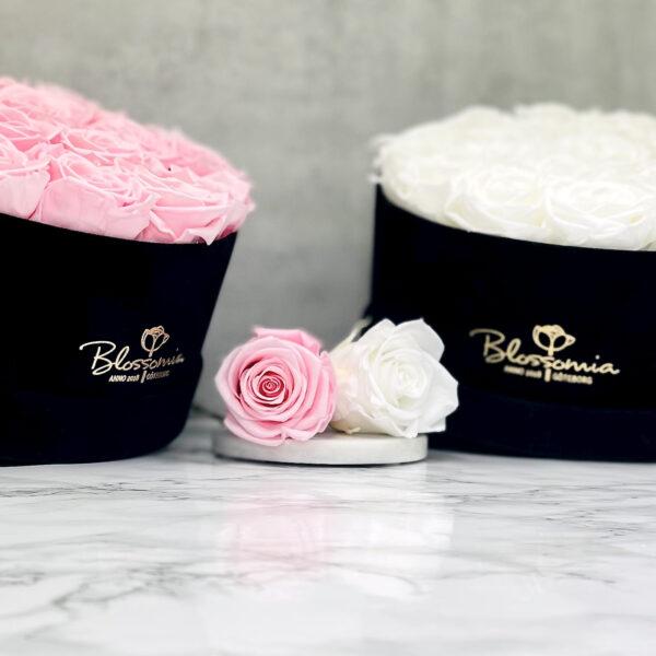 THE MILLENIUM STAR – White och Pink Evighetsrosor Box Rund 11