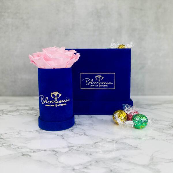 The Aurora - Velvet - Royal Blue - Rosa Evighetsros med godis