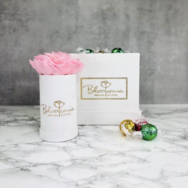 The Aurora - Velvet - White Pearl - Rosa Evighetsros med godis